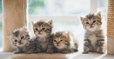 429 Best Umum Images Cats Animals Sick Cat