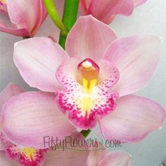 light pink Cymbidium Orchids for hair