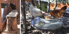 Chicken Feeders
