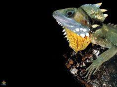 . Reptiles, Creatures, Earth, Animals, Animales, Animaux, Animal, Animais, Mother Goddess