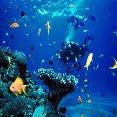 Amazing underwater world in Red Sea, Hurghada Eilat, Scuba Diving Courses, Sea Diving, Underwater Life, Red Sea, Marine Life, Komodo, Barcelona, Ocean
