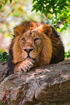 african lion safari - Alex Avedessian - Google+