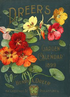 New Flowers Illustration Vintage Garden Markers Ideas Seed Packaging, Vintage Packaging, Vintage Labels, Vintage Cards, Vintage Postcards, Flower Packaging, Vintage Prints, Poster Vintage, Flowers Illustration