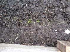 veggie patch veggie vegetable seeds seedling