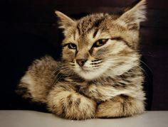 Modern Cat's Photo Contest - DAGE