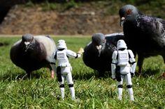 #SW #starwars #pigeons #geek #animals