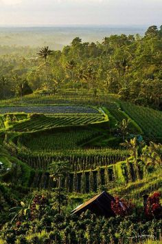 Photo via Bali Expat Services