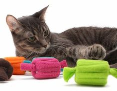 Leftover fleece wrapped around empty thread spools or if you are not crafty can be purchased Homemade Cat Toys, Diy Cat Toys, Dog Toys, Kitten Toys, Cat Crafts, Cat Furniture, Diy Stuffed Animals, Crazy Cats, Cat Love