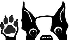 Download boston terrier | Boston Terrier vector illustration ...