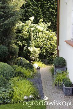 Ogród nie tylko bukszpanowy - część III - strona 20 - Forum ogrodnicze - Ogrodowisko Love Garden, Shade Garden, Dream Garden, Garden Paths, Garden Landscaping, Rose Hedge, Evergreen Garden, Topiary Garden, Garden Images