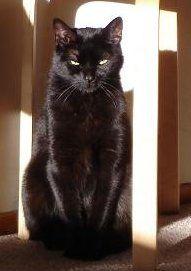 ...ahhh..le chat noir!