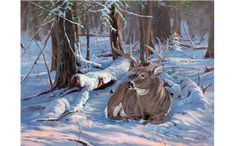 Whitetail Deer Art By Nature Artist Jack Paluh - Artist Studio Meet Jack Paluh Originals And Commissions Plein Airs Studio Videos Market Reports Our Links Studio Location Jacks Art Gift Ideas And Art Meets Craft Scenery Ar Wildlife Paintings, Wildlife Art, Animal Paintings, Deer Photos, Deer Pictures, Deer Pics, Hunting Art, Deer Hunting, Hunting Quotes