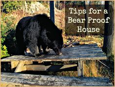 Here are some natural ways to ensure you have a bear proof house. They may or may not work for the bears in your area, but they are definitely worth a shot.