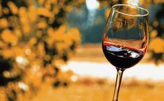 Miniguia Viagem: vinícolas do Chile