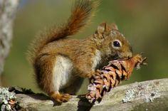 Eichhörnchen von Martin Kalus