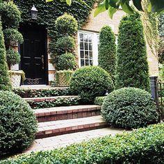 Little Gem arborvitae. A couple of dwarf arborvitae trees would be good! Arborvitae Tree, Boxwood Landscaping, Backyard Landscaping, Landscaping Ideas, Backyard Ideas, Outdoor Plants, Outdoor Gardens, English Cottage, Gardens
