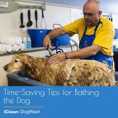 """""""Time-Saving Tips for Bathing the Dog""""- Shortcuts to make dog grooming less of a chore. To read more click here: http://goo.gl/q1DfMX or http://www.icleandogwash.com/ #DogBath #DogClean #DogWash #iCleanDogWash"""