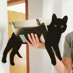 CATS ONLY @catbookclub Instagram photos | Websta