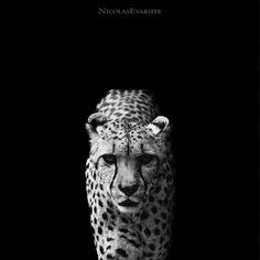 Fotos de animales en blanco y negro