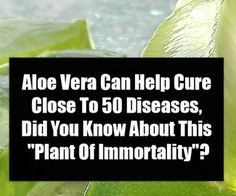 """Aloe Vera Can Help Cure Close To 50 Diseases, Did You Know About This """"Plant Of Immortality""""? Cooking For Two, Fun Cooking, Cooking Classes, Healthy Cooking, Cooking Tips, Cooking Pasta, Thai Cooking, Cooking Chef, Cooking Recipes"""