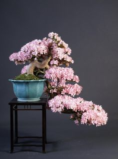 Wow, wonderful design and in full bloom. Bonsai tree by Teunis Jan Klein..