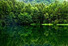 reflected forest. Nagano, Japan - 39 Awesome Nature Photos Of Incredible Places