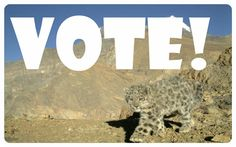 Help the Snow Leopard Trust win a major grant. The vital snow leopard habitat of Upper Spiti Valley in the Indian Himalayas is under threat! But with your help, this paradise can be restored before it is lost.  The European Outdoor Conservation Association EOCA will award the grand to the project with the most votes, so please click on the image link and cast your ballot in support of the endangered snow leopard!