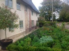 The knott garden we planted just 7 months ago - looking good!