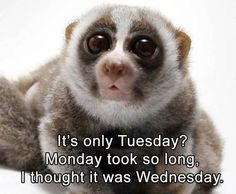 Tuesday is here and only 4 more days to go for the weekend you have waiting for. We bring you 21 funny tuesday memes to push you through the day. Funny Tuesday Images, Funny Tuesday Meme, Happy Tuesday Pictures, Tuesday Humor, Tuesday Quotes, Funny Animal Pictures, Funny Photos, Funny Animals, Funny Happy