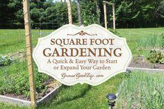 Square Foot Garden: A Quick & Easy Way to Begin a Garden