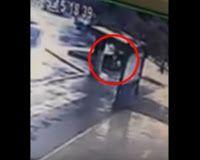 """""""O Grito do Bicho"""": Homem rouba casinha que servia de abrigo para anim..."""