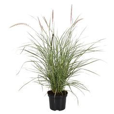 Pyntegress Diameter 19 cm Flerfarget | Plantasjen Planters, Herbs, Flowers, Garden Ideas, Ornamental Plants, Seeds, Florals, Herb, Plant