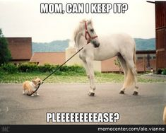 How cute is this little puppy dog trying to lead the horse.  The horse is not a dumb animal.  He says - no way.  Click on pin for Pinterest tips.