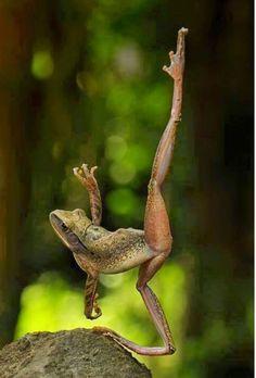 Ballet frog.