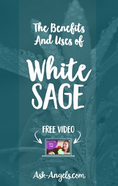 The Benefits And Uses of White Sage
