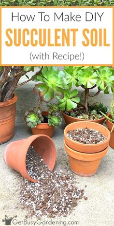 How To Make Your Own Succulent Soil (With Recipe!) - House Plants - ideas of House Plants - This 3 ingredient succulent potting mix recipe is inexpensive easy to make and the best soil for succulents. Here's how to make your own succulent soil! Succulent Potting Mix, Propagating Succulents, Succulent Gardening, Succulent Care, Planting Succulents, Container Gardening, Planting Flowers, Organic Gardening, Succulent Containers
