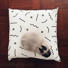 Interior designer bunny checks out his human's latest choice in cushions - January 5, 2015
