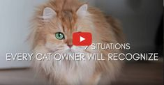 I think it's safe to say that most cat owners will recognize theses 9 situations! #cats #cat