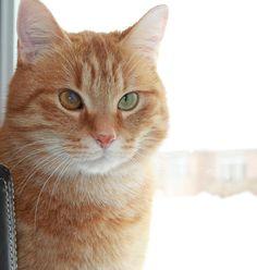 Lost Cat - Unknown - Oshawa, ON, Canada L1J 5X2