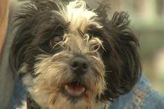 Kalkaska Pet Pantry Needs Holiday Donations - Northern Michigan's News Leader