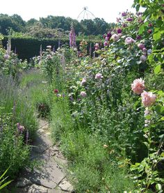 Garden path with roses and lavender