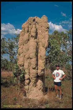 termites' cathedral http://www.skylinepest.com/
