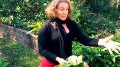 My Permaculture Garden - Morag Gamble