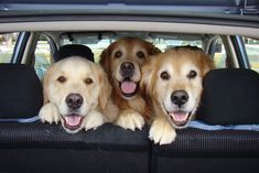 Heading Home...back to the beach in 2 weeks for Doggy morning : )