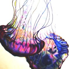 Watercolor Fish, Watercolor Paintings, Medusa, Jellyfish Art, Jellyfish Tattoo, Underwater Art, Light Painting, Pictures To Paint, Sea Creatures
