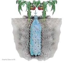Make individual irrigation systems with a soda bottle. Bury it in the soil next to your plants. #plantnite #planthacks