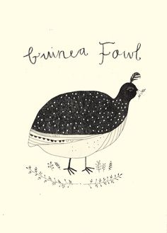Guinea Fowl. Katt Frank illustration.