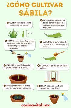 Eco Garden, Home Vegetable Garden, Fruit Garden, Edible Garden, Garden Plants, Growing Vegetables, Growing Plants, Aloe Vera, Gardening Tips