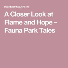 A Closer Look at Flame and Hope – Fauna Park Tales