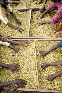 Agribusiness: Africa's Way out of Poverty